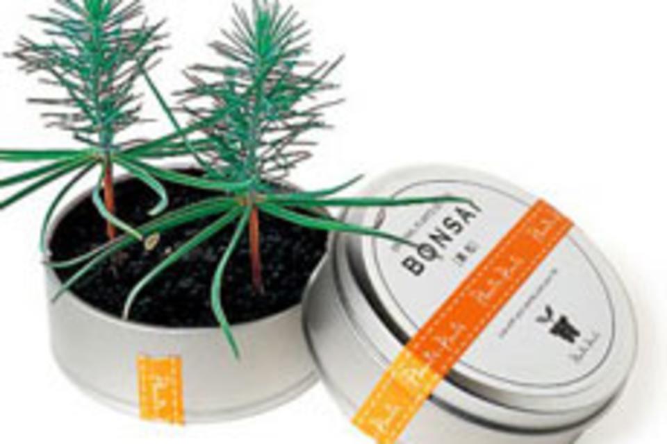 Bonsai Tree in a Can