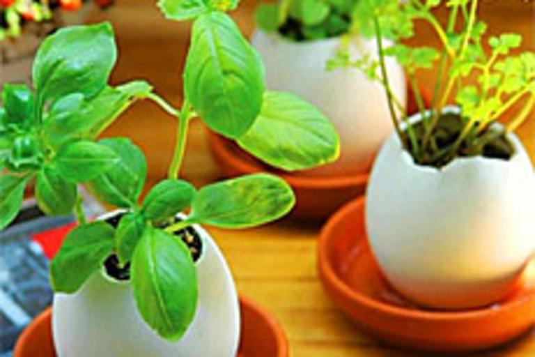 Eggling Planter