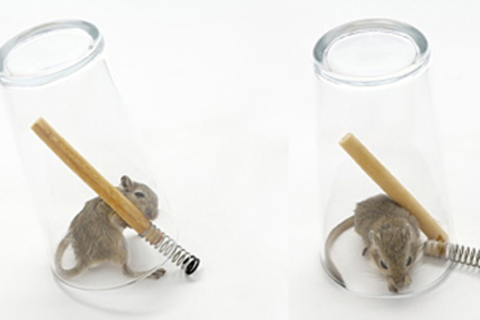 Mouse in a Pint