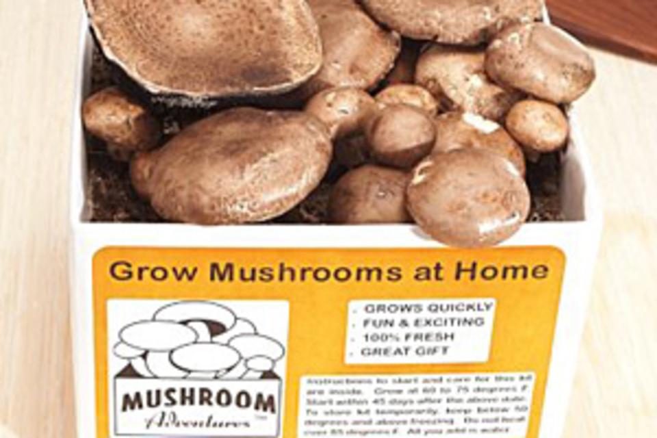Portobello Mushroom Growing Kit