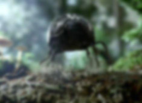Black Beetle Commercial