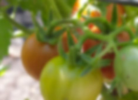 Badass Vegetable Garden