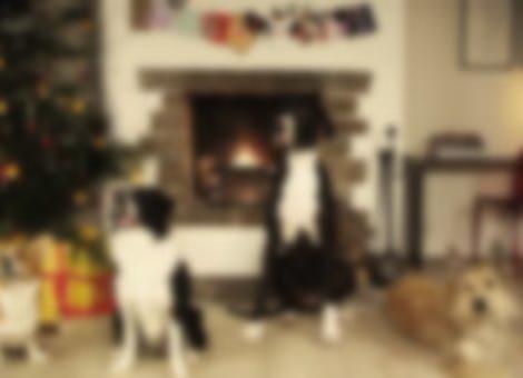Jingle Barks