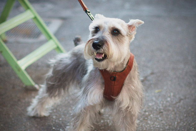 Chico & Dog Vest