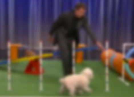 Will Ferrell's Canine Obstacle Course