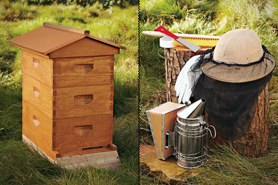 Backyard Beehive