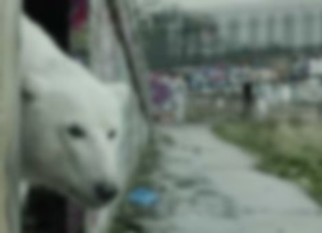 A Homeless Polar Bear In London