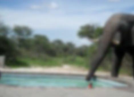 Elephant Crashes Pool Party