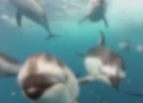 Dolphin Surprise