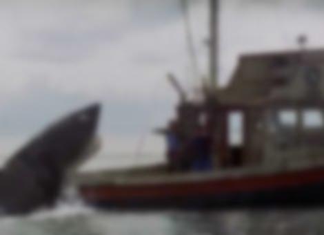 Jaws Film Restoration