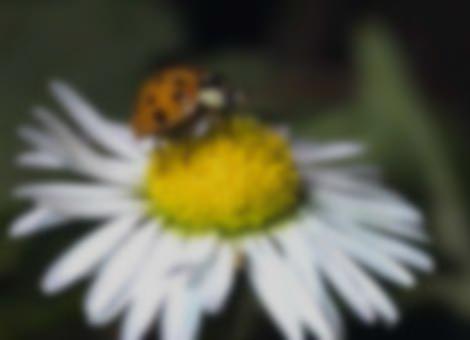 Slow Mo Ladybug