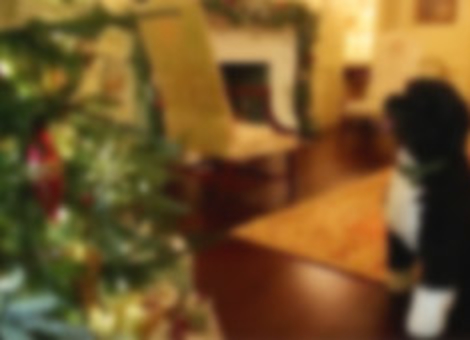 The First Dog Inspects White House Holiday Decorations