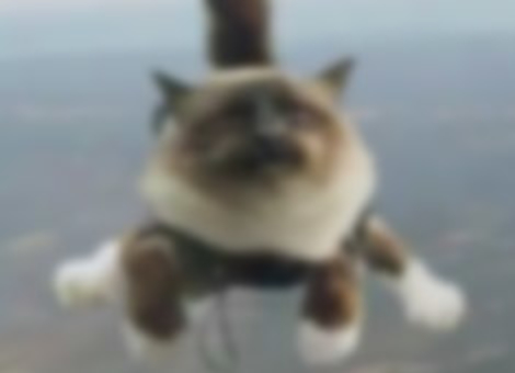 Synchronized Skydiving Cats