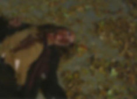 The Walking Dead Dumb Ways To Die