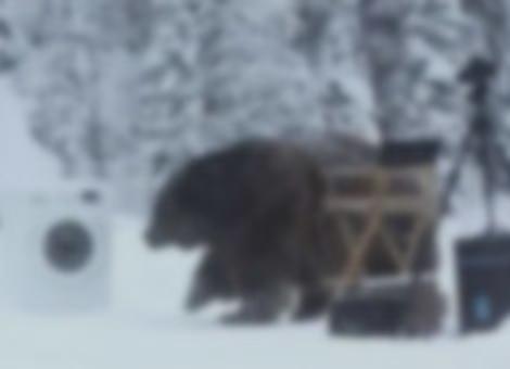 Bear Uses Washing Machine