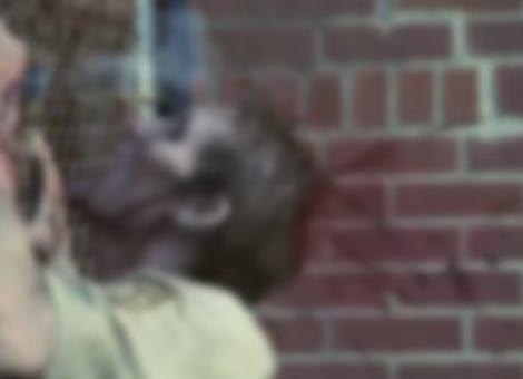 Zombie Headshots