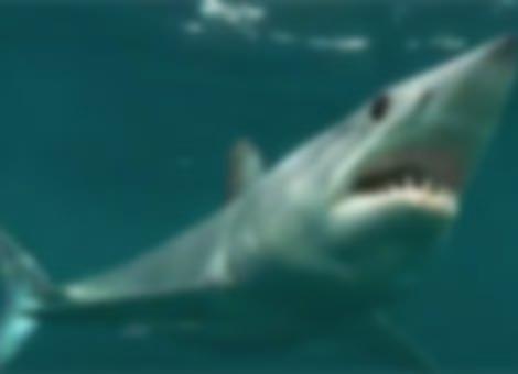 A Mako Shark's Last Meal