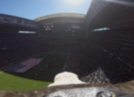 Bald Eagle Flies Over NRG Stadium