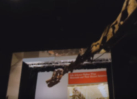 Largest Dinosaur Ever on Display