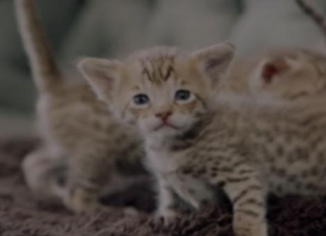 $165,000 Kittens