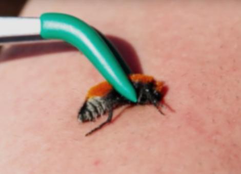 Velvet Ant Sting
