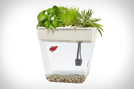 Pets uncrate for Moai fish tank cleaner