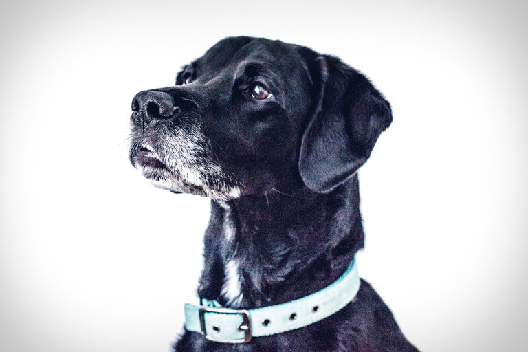 TSA Canine Adoption Program
