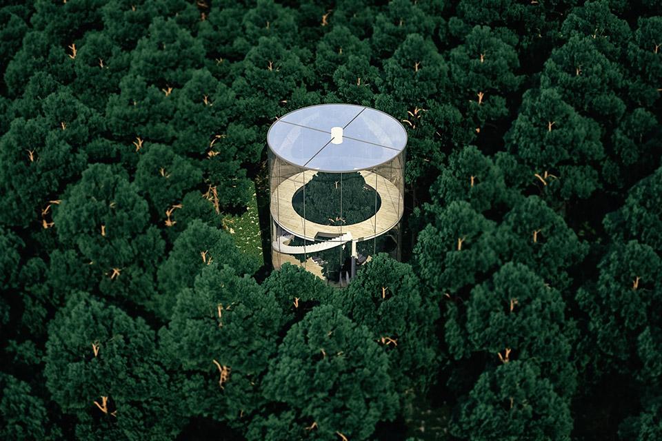 Glass Tree House