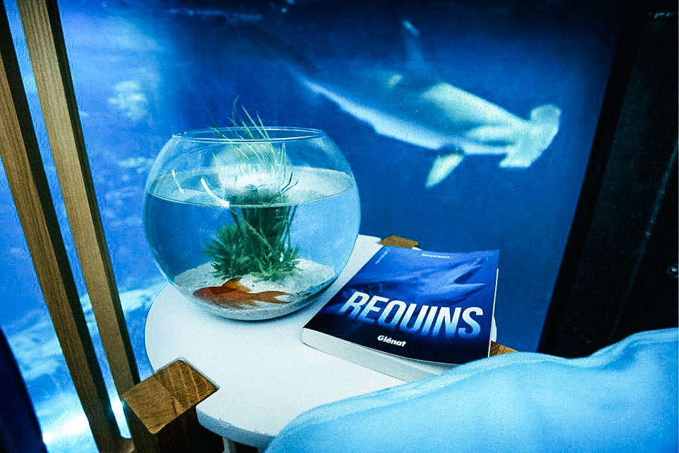 Shark Aquarium Underwater Bedroom