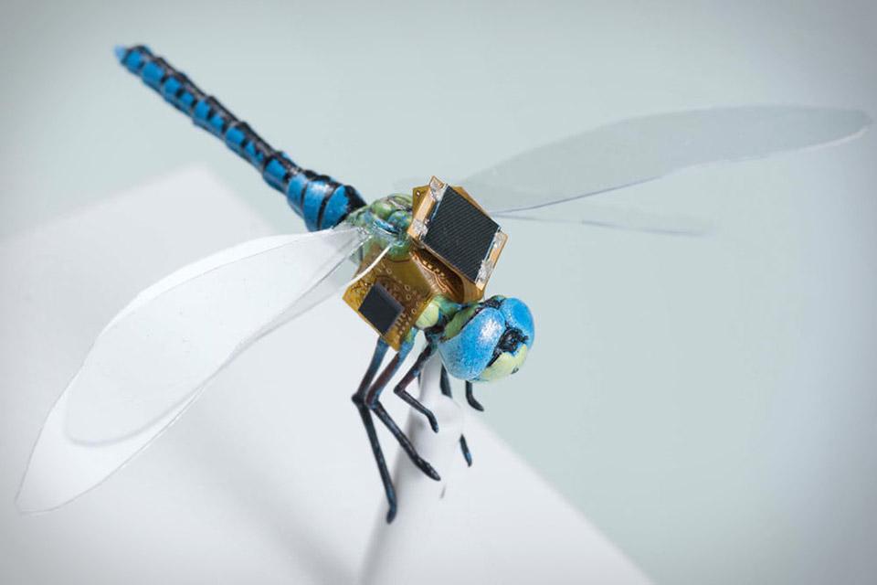 Dragonfly Cyborg